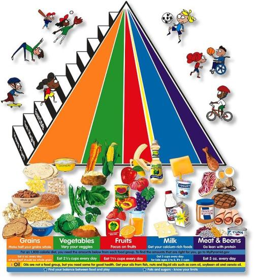 food-pyramid new